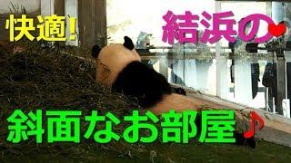 【パンダ】PANDA  斜面に沿って座るパンダって可愛い❤ 結浜🎀