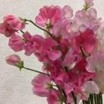 花束通信単発レッスン〜ピンク色の可愛いスイトピーの花束&フラワーアレンジメントを作ろう