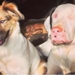 【衝撃】悪質ブリーダーにより生み出された2匹の犬盲目の犬。互いに寄り添い助け合う2匹の犬の姿に胸が締め付けられる【世界が感動!涙と感動エピソード】