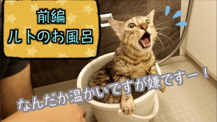 風呂嫌いなのに湯船を用意したら入るルトが可愛い!!