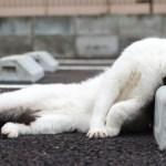 「猫かわいい」 すごくかわいい子猫 – 最も面白い猫の映画 #318
