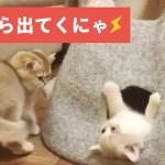 猫専用の人気物件を取り合うニャンコたちがカワイイ🐱✨【PECO TV】