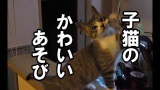 かわいい子猫の楽しい一人遊びとは?!