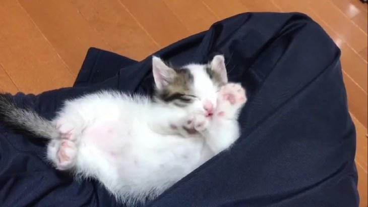 ご飯を邪魔されても顔洗いがかわいい子猫