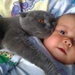 「猫かわいい」 すごくかわいい子猫 – 最も面白い猫の映画 #313