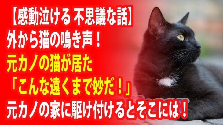 【感動泣ける 不思議な話】外から猫の鳴き声!元カノの猫が居た「こんな遠くまで妙だ!」元カノの家に駆け付けるとそこには!Miyu