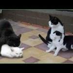 「面白い動物」あり得ないことをする犬, 猫・おもしろ犬, 猫のハプニング, 失敗集 #201