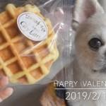 生まれて初めてのワッフルに食いつきがすごい〜happy  Valentine〜