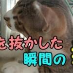 子猫が驚きすぎて腰を抜かした瞬間!