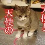 かわいい子猫が突然お家にやってきた-その時、先住猫達は・・・?!13週間目1-kitten came to our house 87