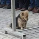 【感動】最愛の飼い主の墓に自らの意思で通い続けた犬!…そこからまた新たな絆が・・【世界が感動!涙と感動エピソード】
