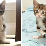 【感動実話】前足が不自由だったため、後ろ足で立つことを学んだ子猫。障がいを抱えながらも、元気に成長していく姿に胸が熱くなる