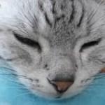 本当に心を許した相手にだけ見せるかわいい失体♥ 完璧な猫が母ちゃんだけ見せる姿 – Goofy Face Cat