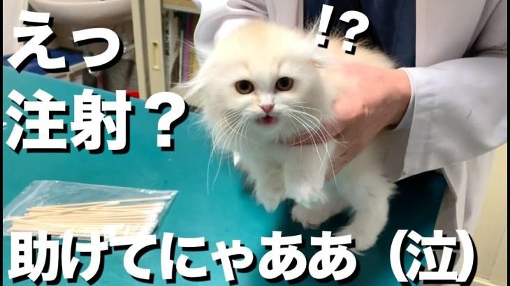 猫を病院へ。獣医さんの神対応がすごい