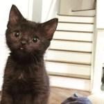 舌をペロリと出しておねだりする子猫の、可愛い姿に誰も拒否することが出来ない!