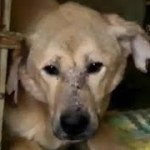 【驚愕】1匹の犬だけなんて無理!…シェルターごと引き取った女性の驚くべき決断【世界が感動!涙と感動エピソード】