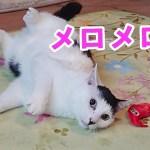 海苔男さん日記⑱〜初めての1人遊びでお魚の鯛にメロメロで可愛いすぎる猫