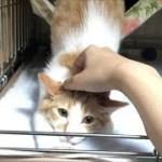 すごいポーズで撫でられる子猫