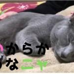 夜になると眠たい猫がカワイイ
