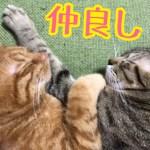 抱き合って寝るかわいい猫達。