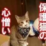 その後の、かわいい子猫が突然お家にやってきた-その時、先住猫達は・・・6-保護猫の気遣い