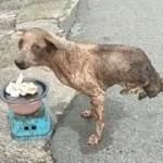 「泣ける感動」人生に疲れたあなたへ!! 見てほしい犬, 動物の感動動画・見たら元気が出る