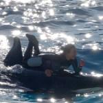 感動! 光の中のシャチパフォーマンスpart1  Orcas and trainers@KAMOGAWA SEA WORLD
