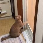 入浴中に地味に乱入してくる猫がかわいい