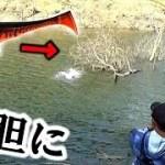 「魚のなる木」に「集魚力が凄いルアー」を投げると・・・【ダンクル7】