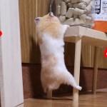 ハムスターの悪あがきが必死すぎて最高に可愛い!ー可愛い癒しおもしろ動物Hamster's bad luck is the most cute!