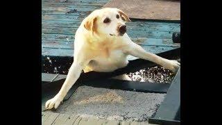 【面白い動画】 かわいい猫 – かわいい犬 – 最も面白いペットの動画 #57