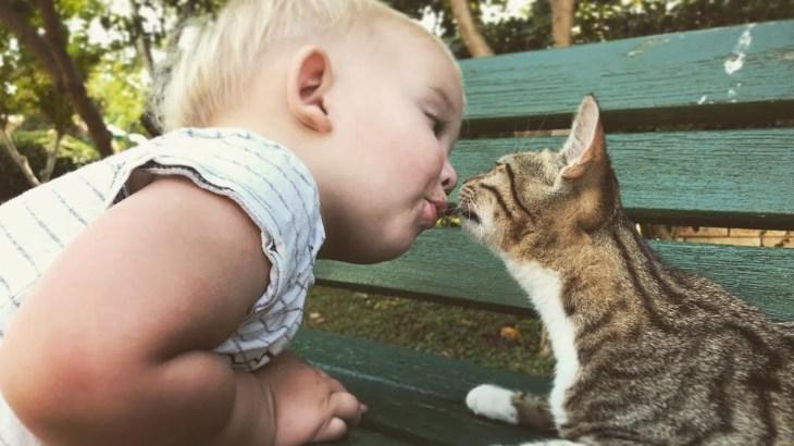 【面白い動画】赤ちゃんと猫の素晴らしい友情 || 面白い赤ちゃんとペット