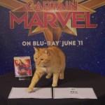 『キャプテン・マーベル』猫のグースのインタビューがかわいい!