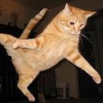 面白い猫は忍者のようにジャンプして失敗する || 面白い赤ちゃんとペット