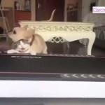 「絶対笑う」最高におもしろい犬,猫,動物のハプニング, 失敗画像集 #10