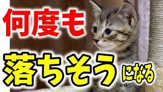 かわいい子猫 何度も落ちそうになる子猫がかわいい Kitten is about to fall from above
