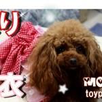 【犬服】モモの今年の可愛い浴衣が出来ました♪ トイプードルモモ tpypoodle.MOMO