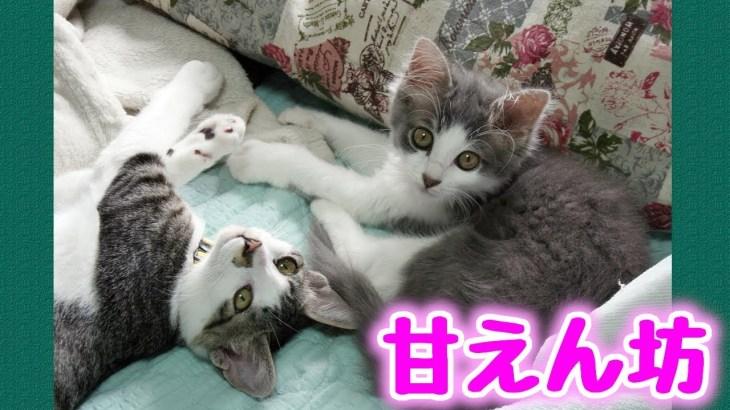 甘えたくて飼い主の机から離れない可愛い子猫たち