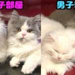 【猫の性格】メス部屋とオス部屋の散らかり方の違いがすごい…!!