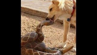 面白い犬と猫のビデオを見ているときは笑わないでください。 2019年の面白い動物 #450