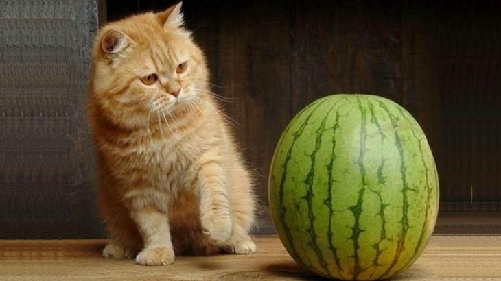 「絶対笑う」最高におもしろ犬,猫,動物のハプニング, 失敗画像集
