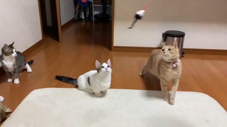 【3部作】お母さんの独り言が耳に入らない猫たちがかわいい
