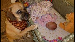 「かわいい犬」 初めて人間の赤ちゃんに会った犬の反応が超おもしろ・