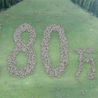 タマホーム のCM 「走る少女」篇。家一本で100本の花粉の飛ばない杉を植える活動。