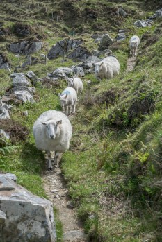 Guess who gets the right-of-way on Sheeps Head Peninsula trails?