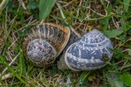 Snails at Port Salon Beach