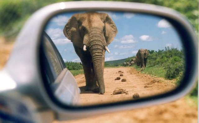 Image result for elephants in rear view mirror pictures