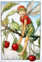 Alphonso the Cherry Fairy