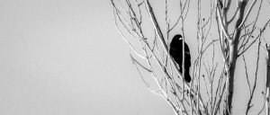 even the birds are chained to the sky