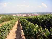 Missouri Vineyards